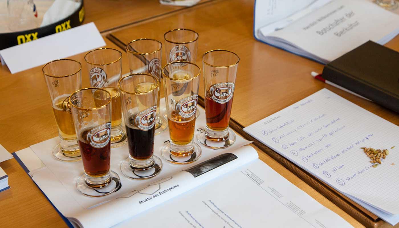 Gold Ochsens Bierverkostung